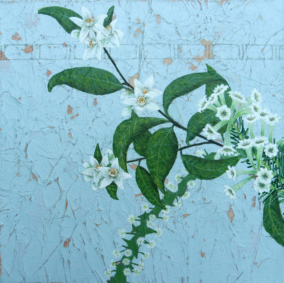 Painting of winged wattle